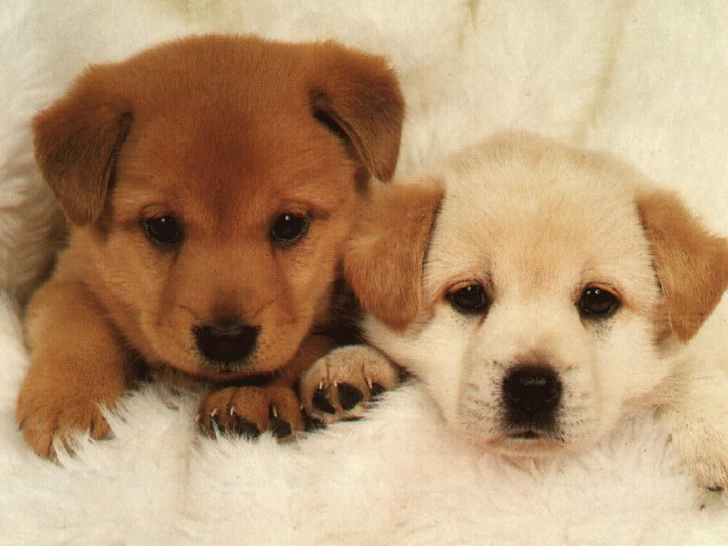 Photo Of Puppy Dogs Very Pretty Cute Animals Baby Dogs Cute