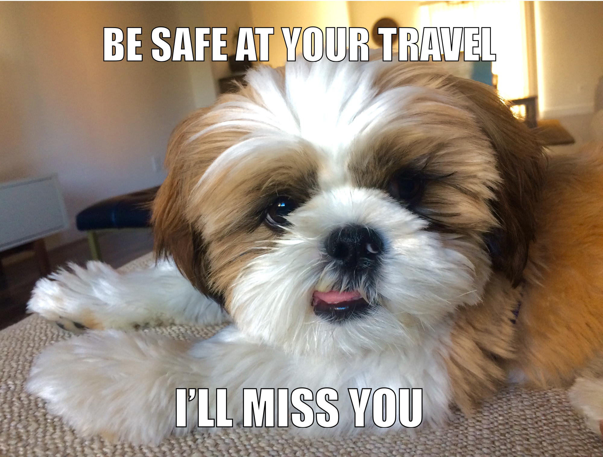 Cute Shih Tzu Puppy Travel Meme Be Safe At Your Travel I Ll Miss You Traveling By Yourself Travel Meme Shih Tzu Puppy