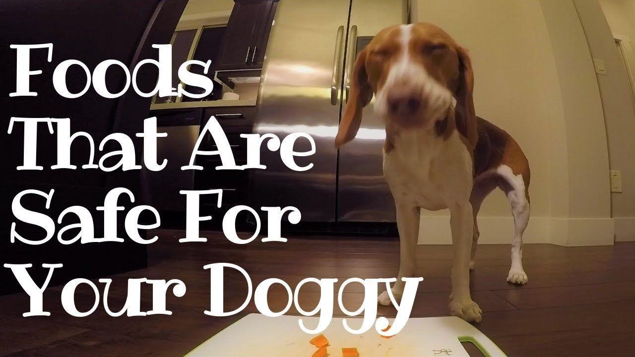 What Foods Are Safe For Your Beagle Beagle Cute Beagles Beagle