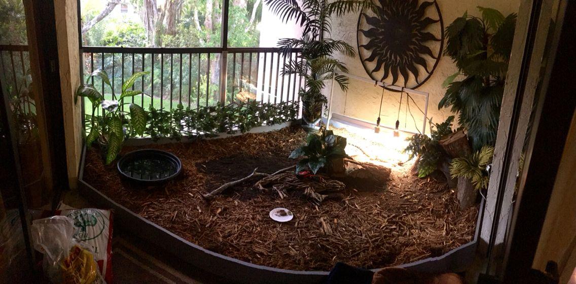 free roam reptile habitat enclosure cage patio porch tegu diy
