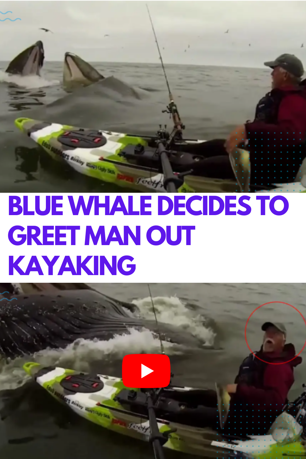Blue whale decides to greet man out kayaking