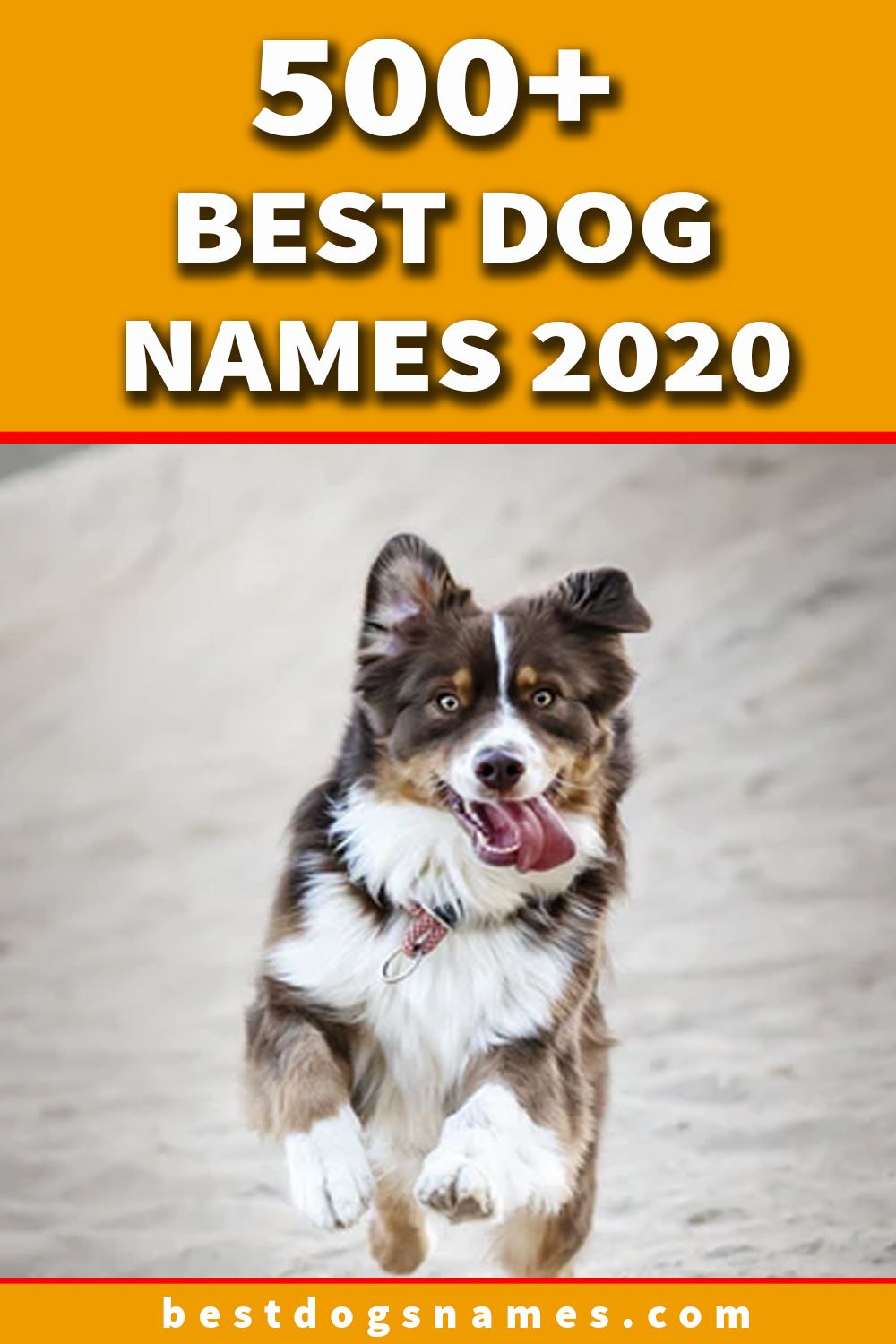 Pin By Petshoper Pet Names Pet In On Best Dog Names In 2020 Best Dog Names Dogs Names List Cute Names For Dogs