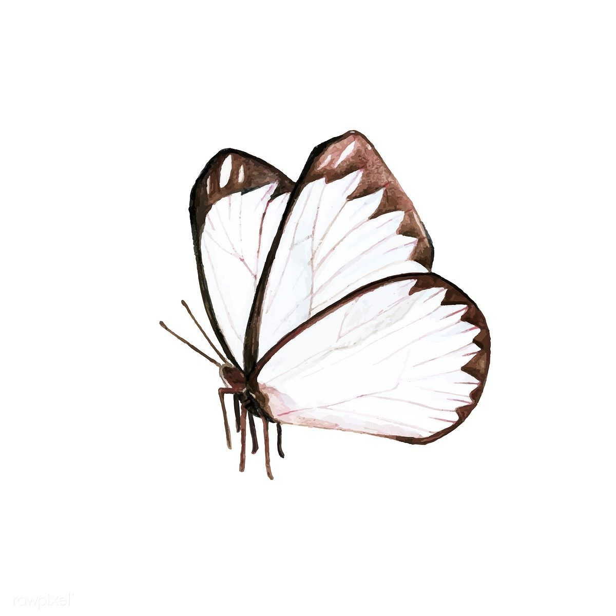 Download Premium Vector Of Hand Drawn Butterfly Isolated On