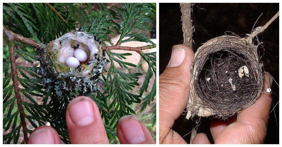 These Tiny Eggs And Nests In Your Yard Belong To
