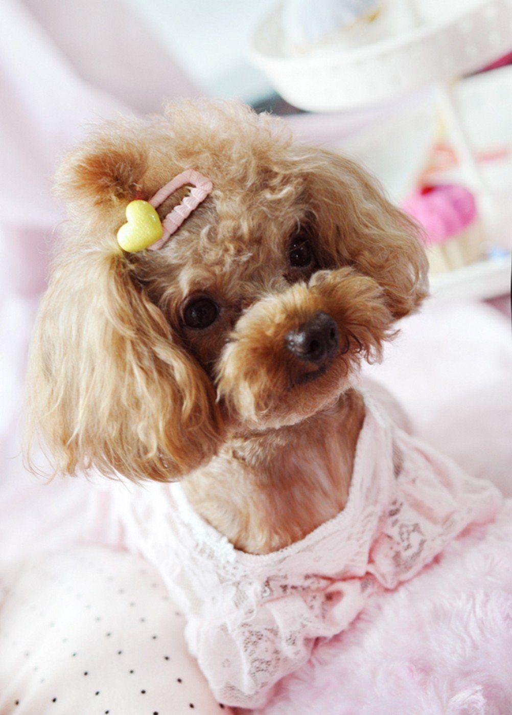 Amazing Hair Bows Bow Adorable Dog - 56d57669603b1b6fc4b5ba46e523e9a1  Snapshot_229743  .jpg