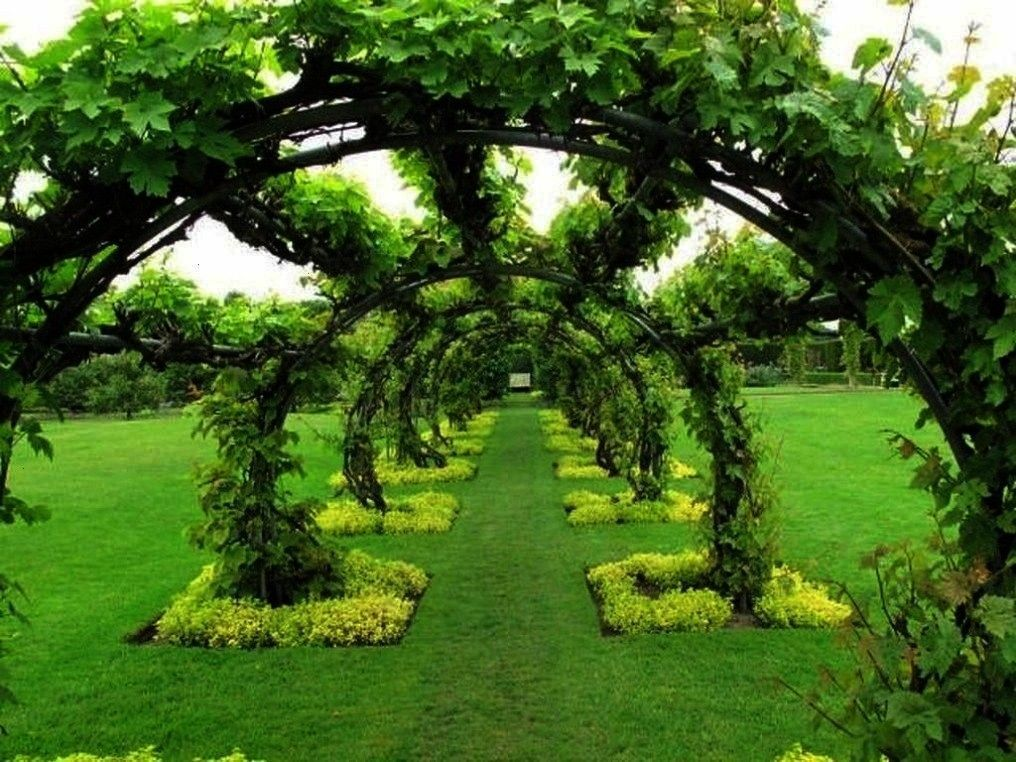 Vine Ideas To Beautify Your Garden Trendehouse Inspiring Grape