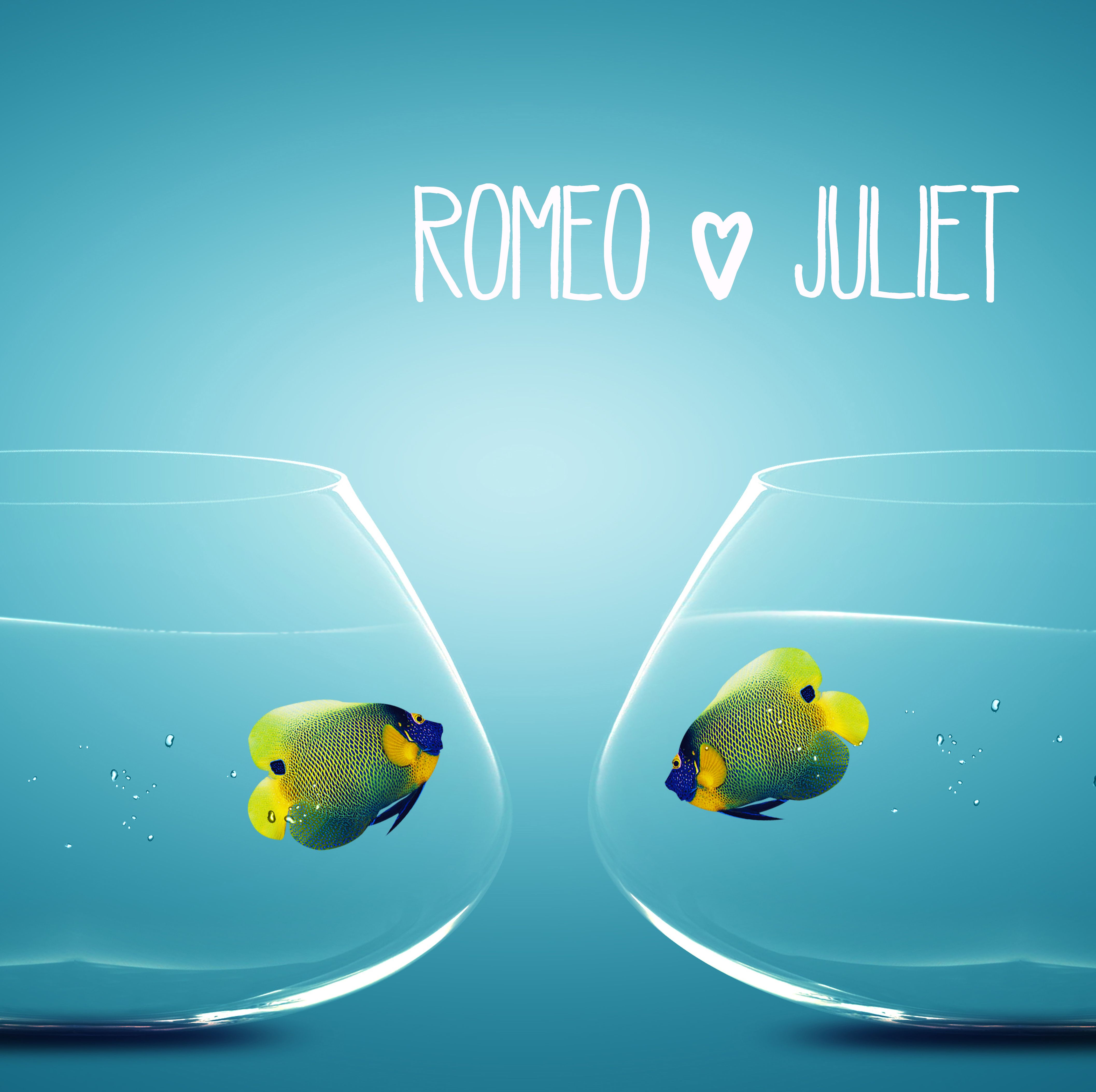 Romeo & Juliet - Pet Fish... #aqua #teal #turquoise