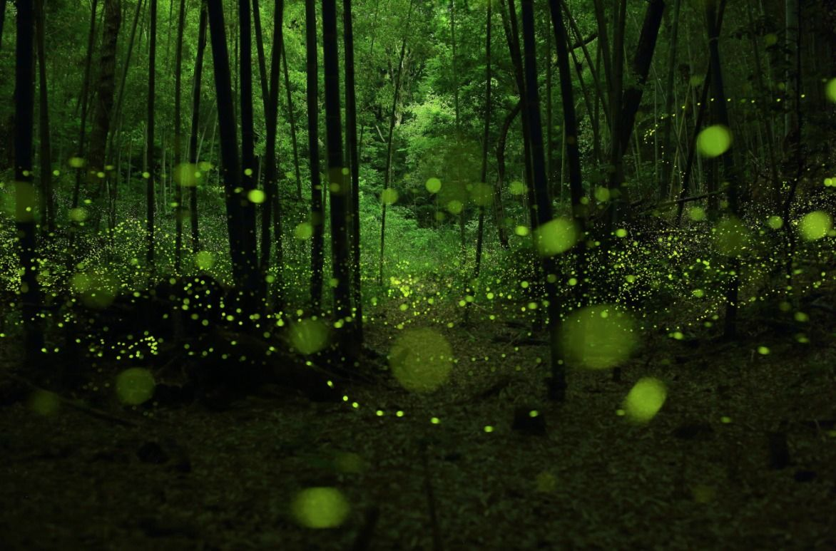 """Last dance of the fairies"" | Khooll.com"