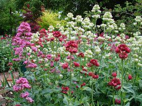 New Utah Gardener: The Most Drought-Tolerant Waterwise Flowers - Flowering Perennials for Utah
