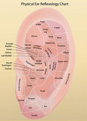 EAR REFLEXOLOGY CHARTS - Tips for recognizing a good reflexology ear