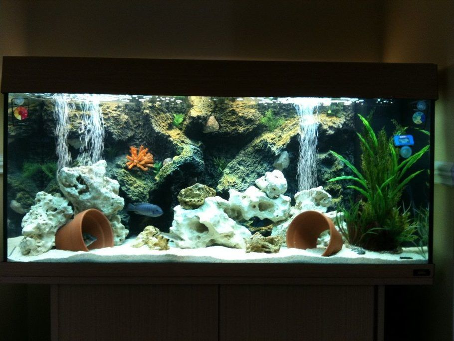 My juwel rio180 malawi cichlid tank setup tank stands for Fish tank setup ideas