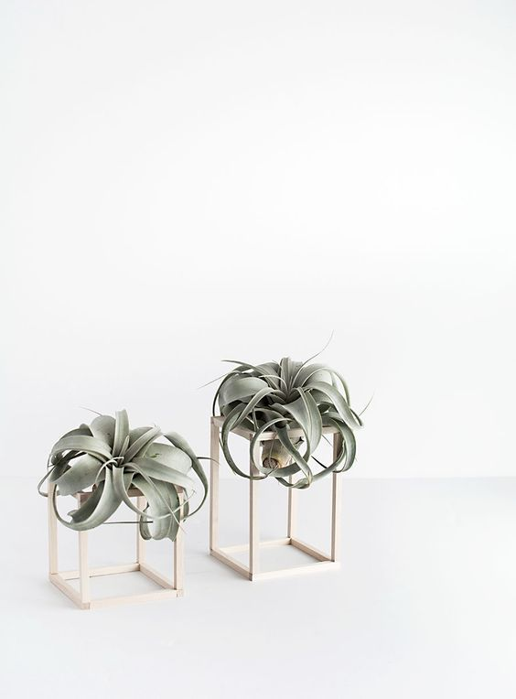 Exceptionally Beautiful Air Plant Holder Ideas to Collect 23 Exceptionally Beautiful Air Plant Holder Ideas to Collect23 Exceptionally Beautiful Air Plant Holder Ideas to Collect
