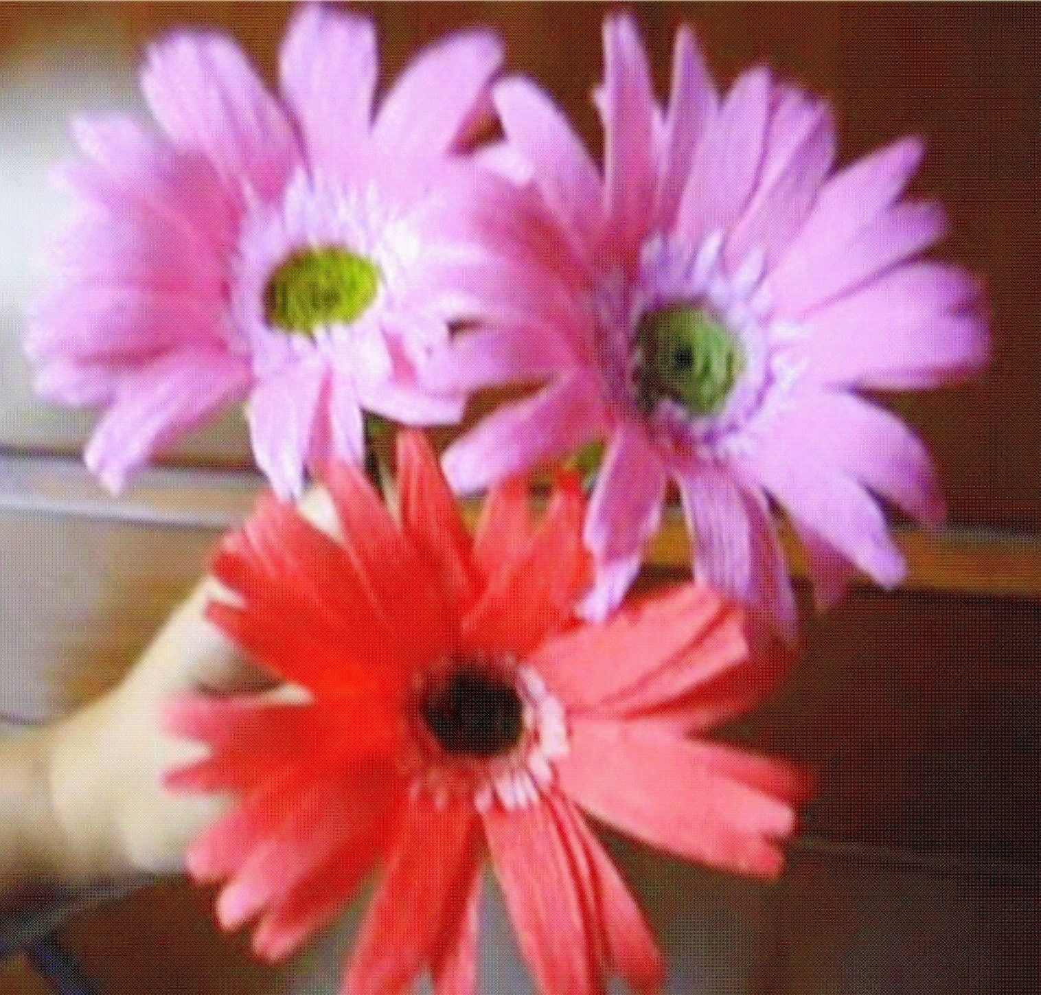 Paper Flower Gerbera Daisy Gerbera Flower And Diy Paper