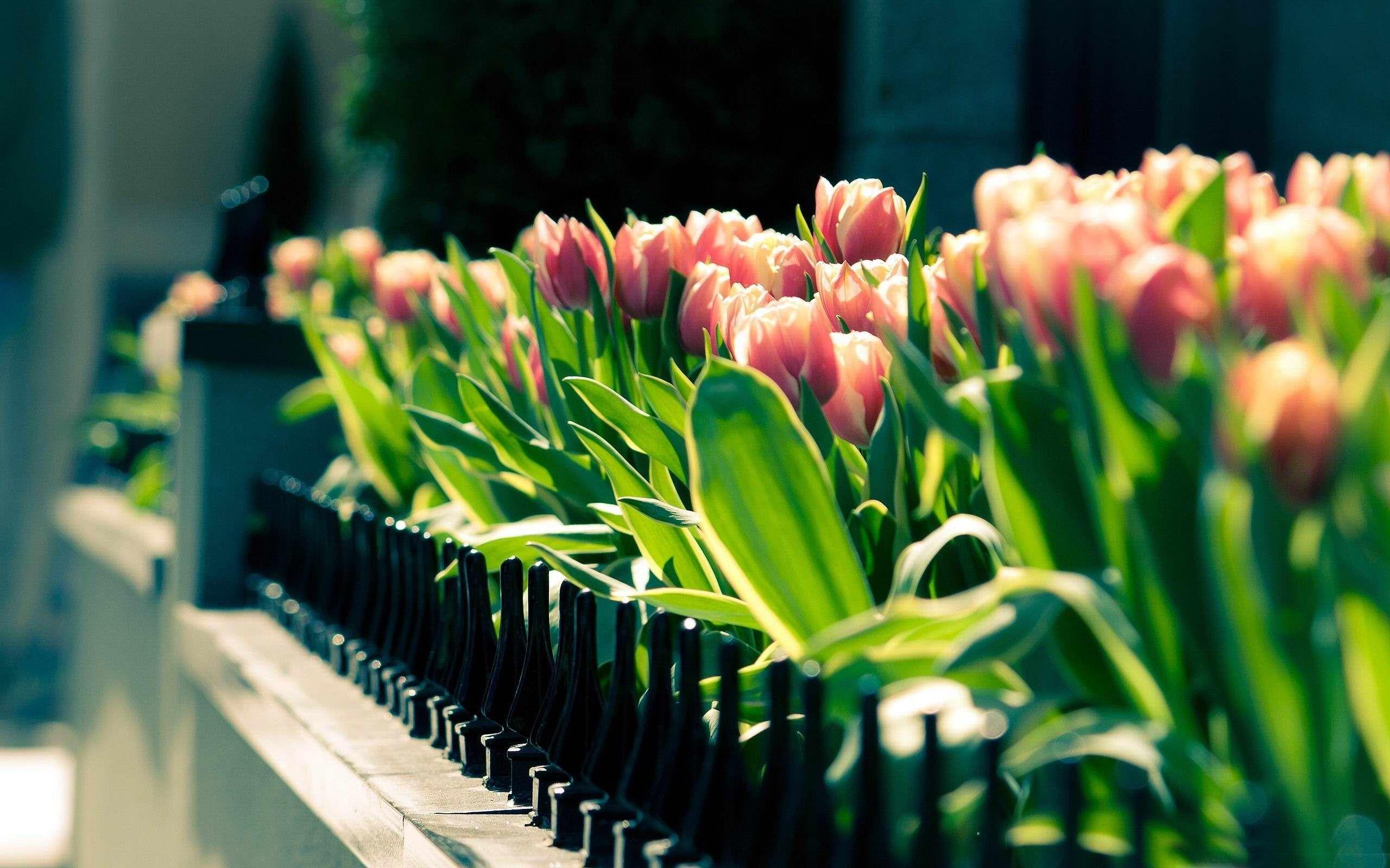 Spring Wallpaper For Desktop Spring Wallpaper High Definition On Wallpaper Hd Wallpaper Bits Spring Desktop Wallpaper Flowers Photography Flower Wallpaper