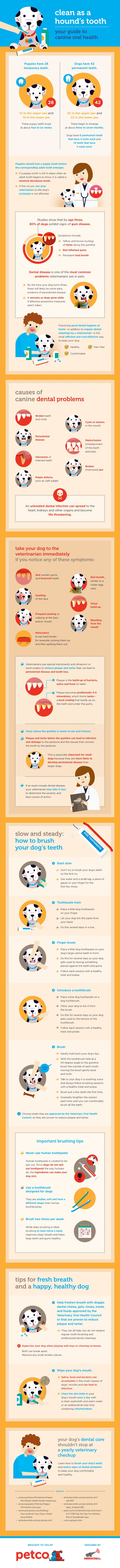 New Infographic On Canine Oral Care From Petco Canine Dental Dog Dental Care