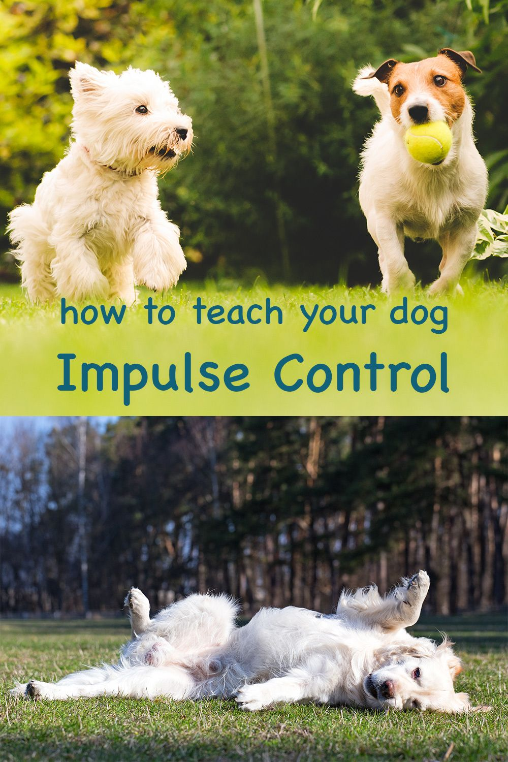 Teach Your Dog Impulse Control Exercises to Help With