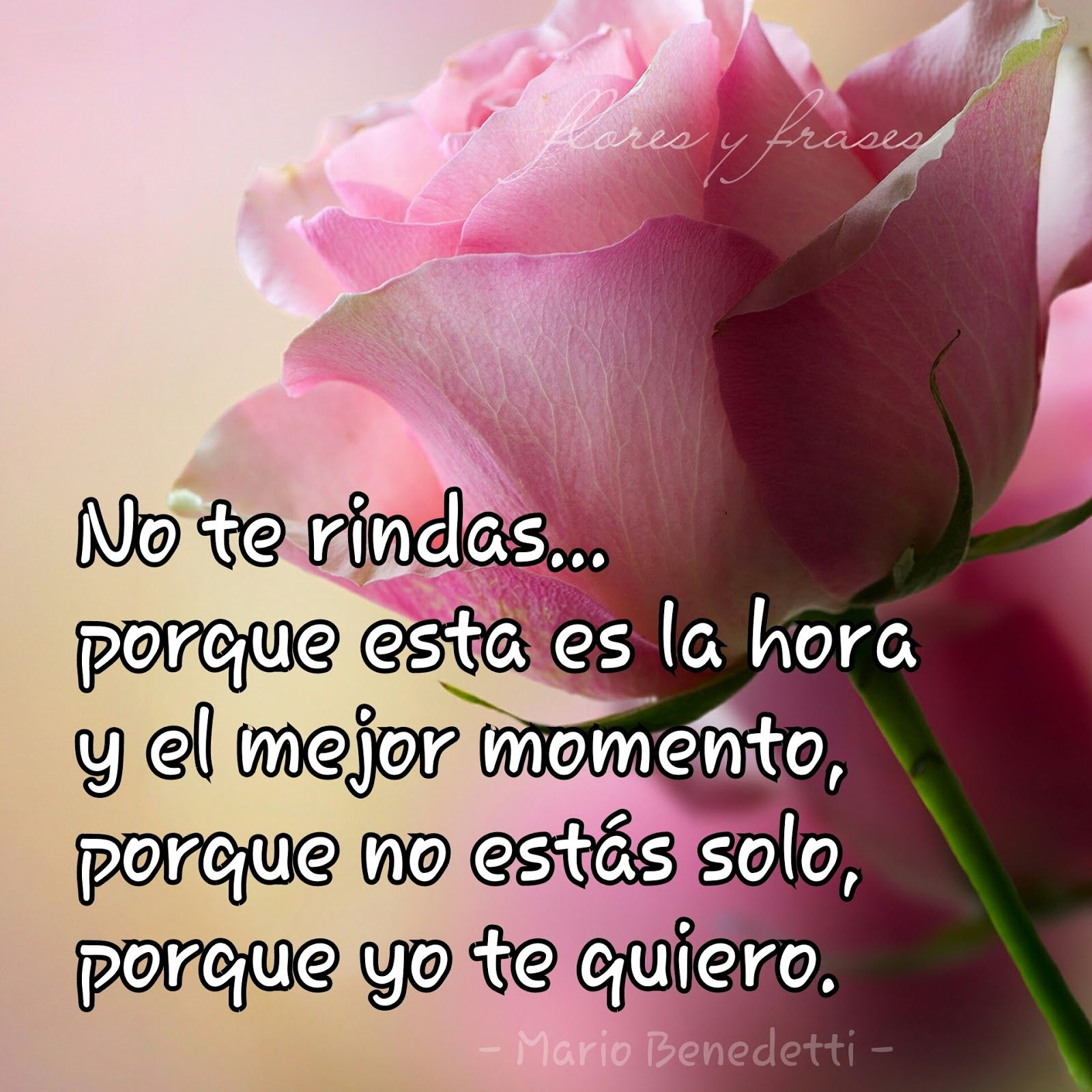 Flores Y Frases Frases De Amor De Mario Benedetti Frases