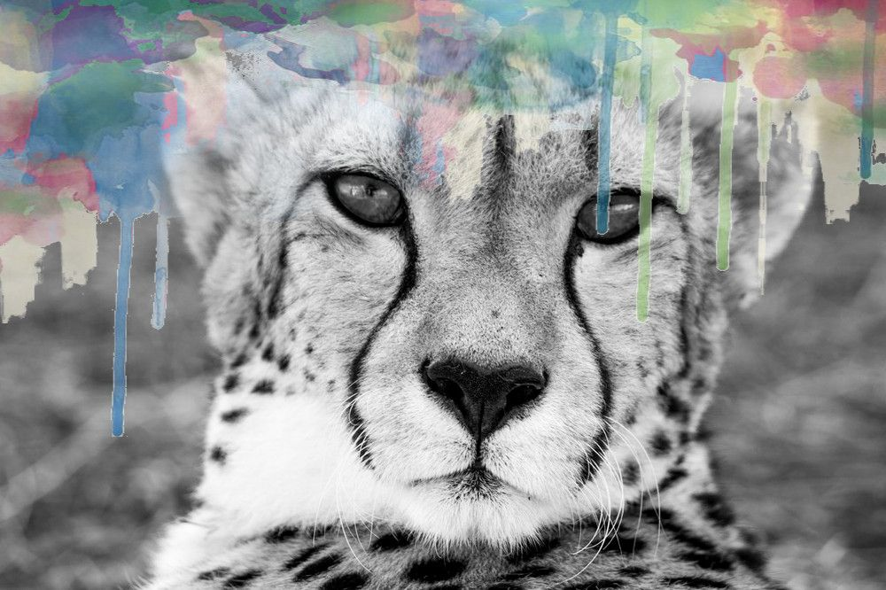 Cheetah Symbolism Art Spirit Animal Medicine Meaning Magic
