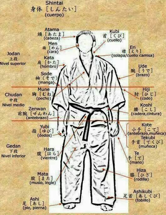 Karate Partes Del Cuerpo Martial Arts Techniques Aikido Martial Arts Kyokushin Karate