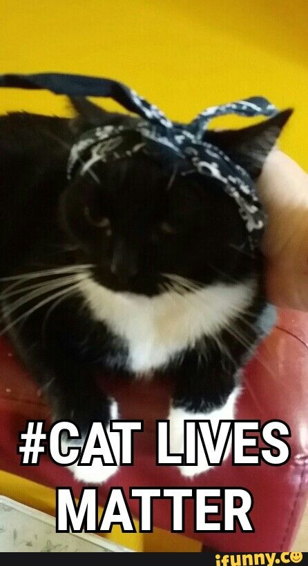 This is adorable :) #cats #memes