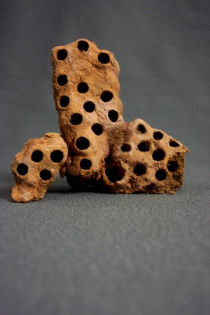 Mud Dauber Nest Natural Architecture Nature Inspiration Bugs And Insects