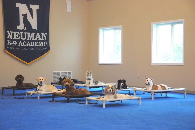 Puppy boot camp mn