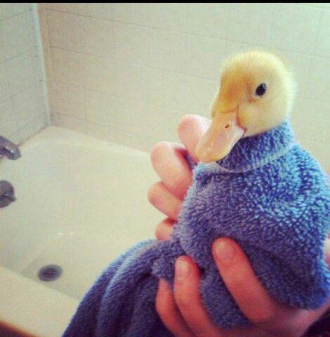 Duckie bath