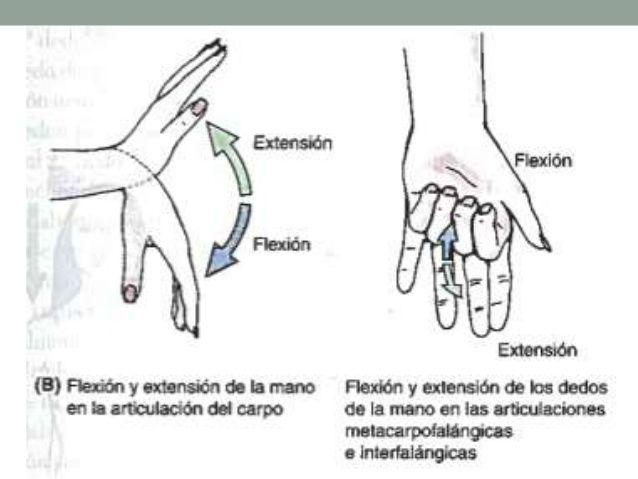 Imagen Sobre Anatomia Y Fisiologia De Valeria Martinez En