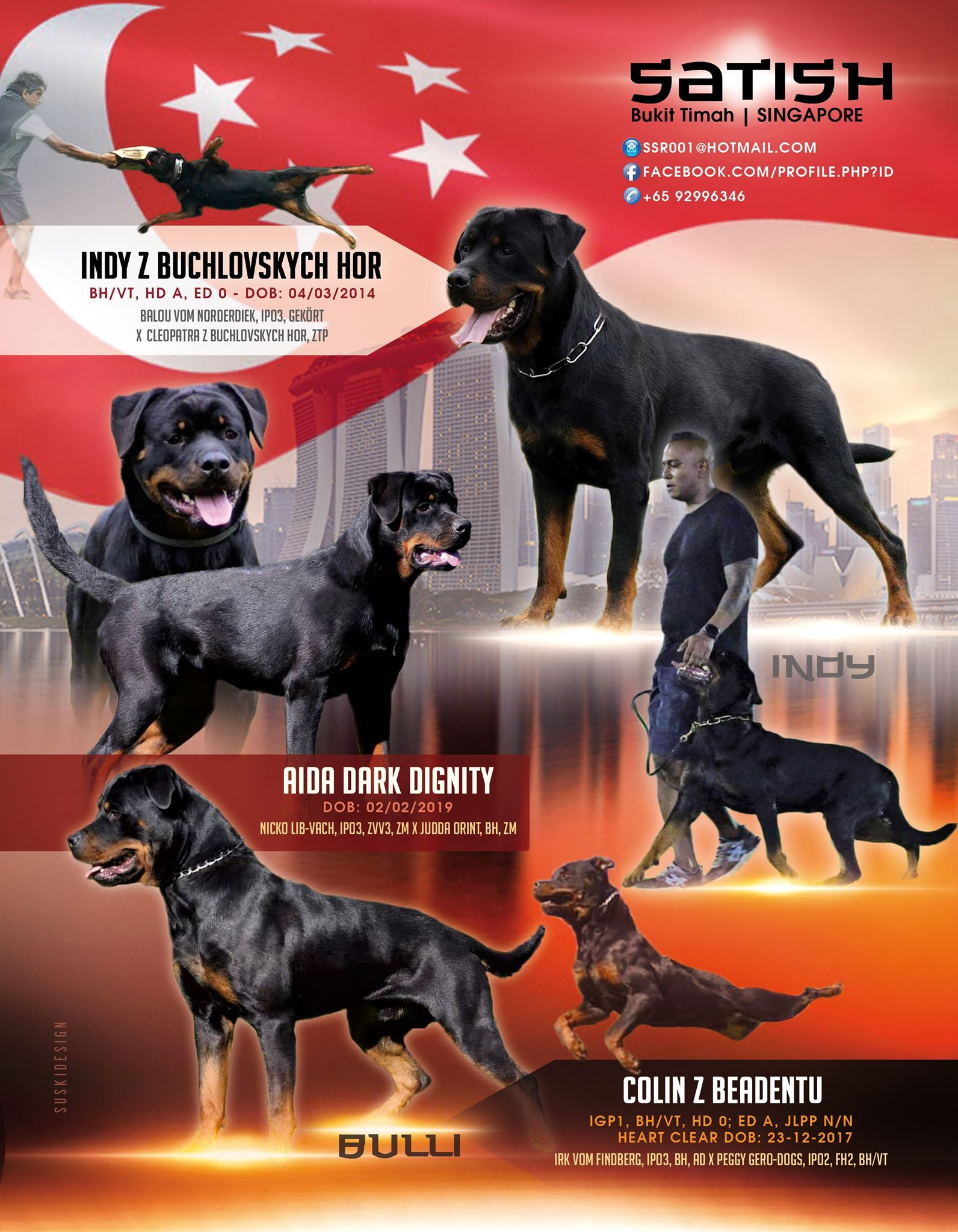 Satish Bukit Timah Singapore Ssr001 Hotmail Com 65 92996346 Www Facebook Com Profile Php Id In 2020 Rottweiler Breed Rottweiler Stud Dog