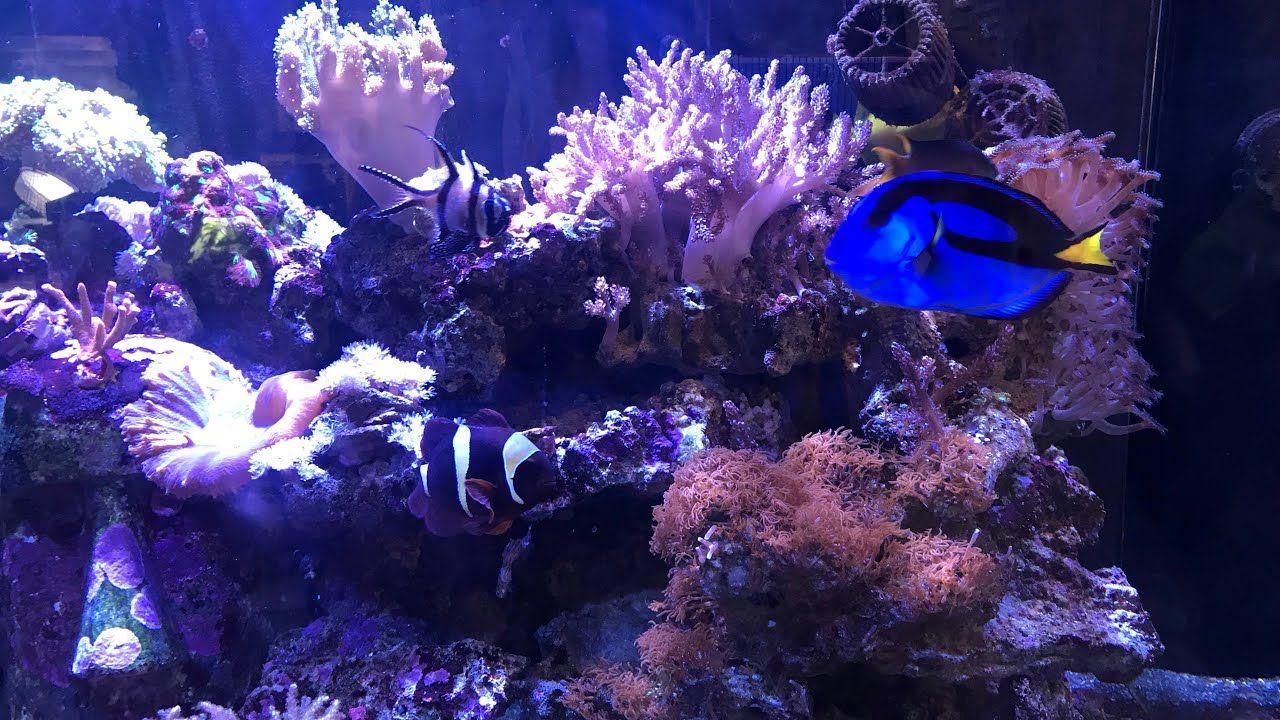 Aquariums aquarium turtles nemo dory fish cold water fish