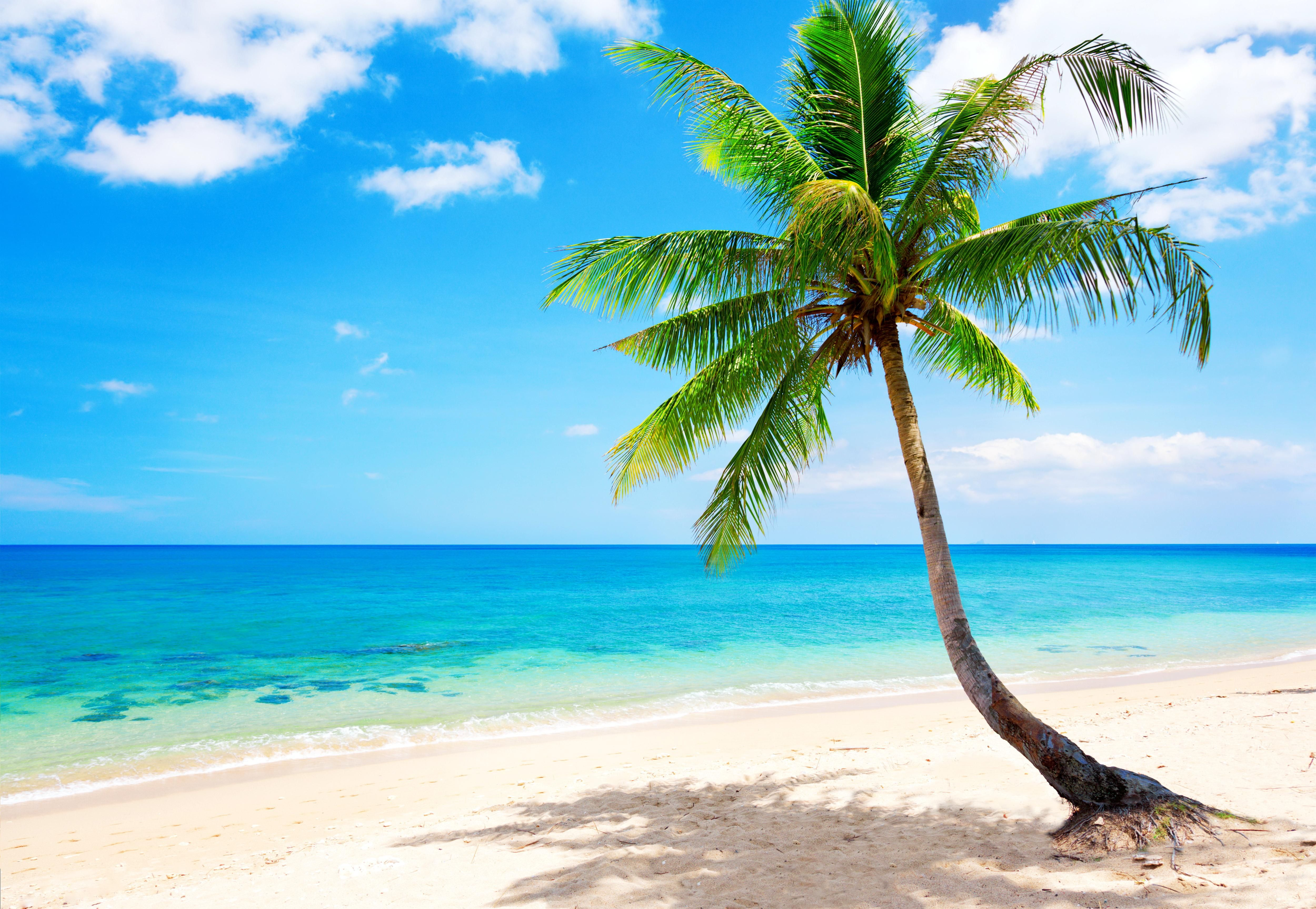 Tropical Beach Wallpapers | Tropical in 2019 | Beach ...