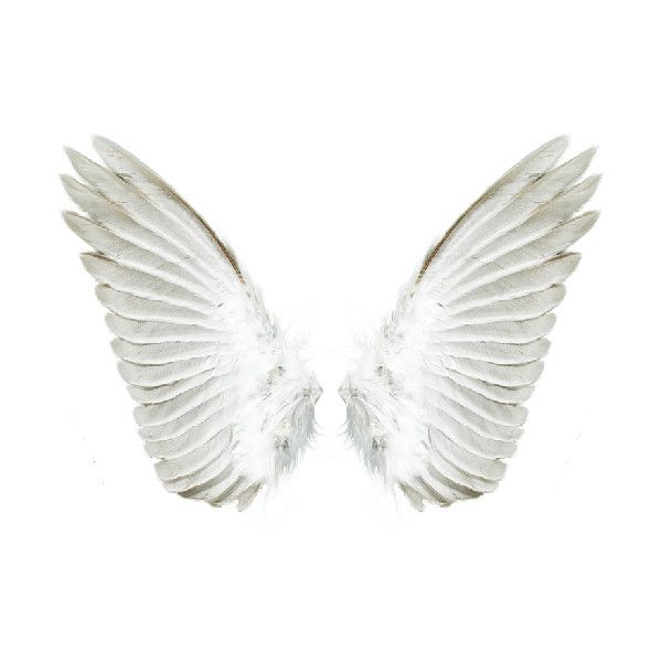 Tubes Ailes Liked On Polyvore Angel Wings Png Wings Png Projector Photography