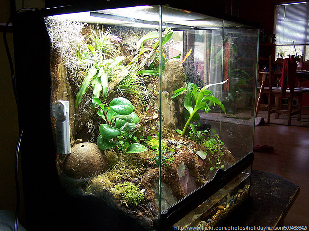 Large terrarium ideas terrariums and wardian cases also for Fish tank terrarium