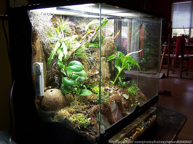 Large Terrarium Ideas Terrariums And Wardian Cases Also Protect
