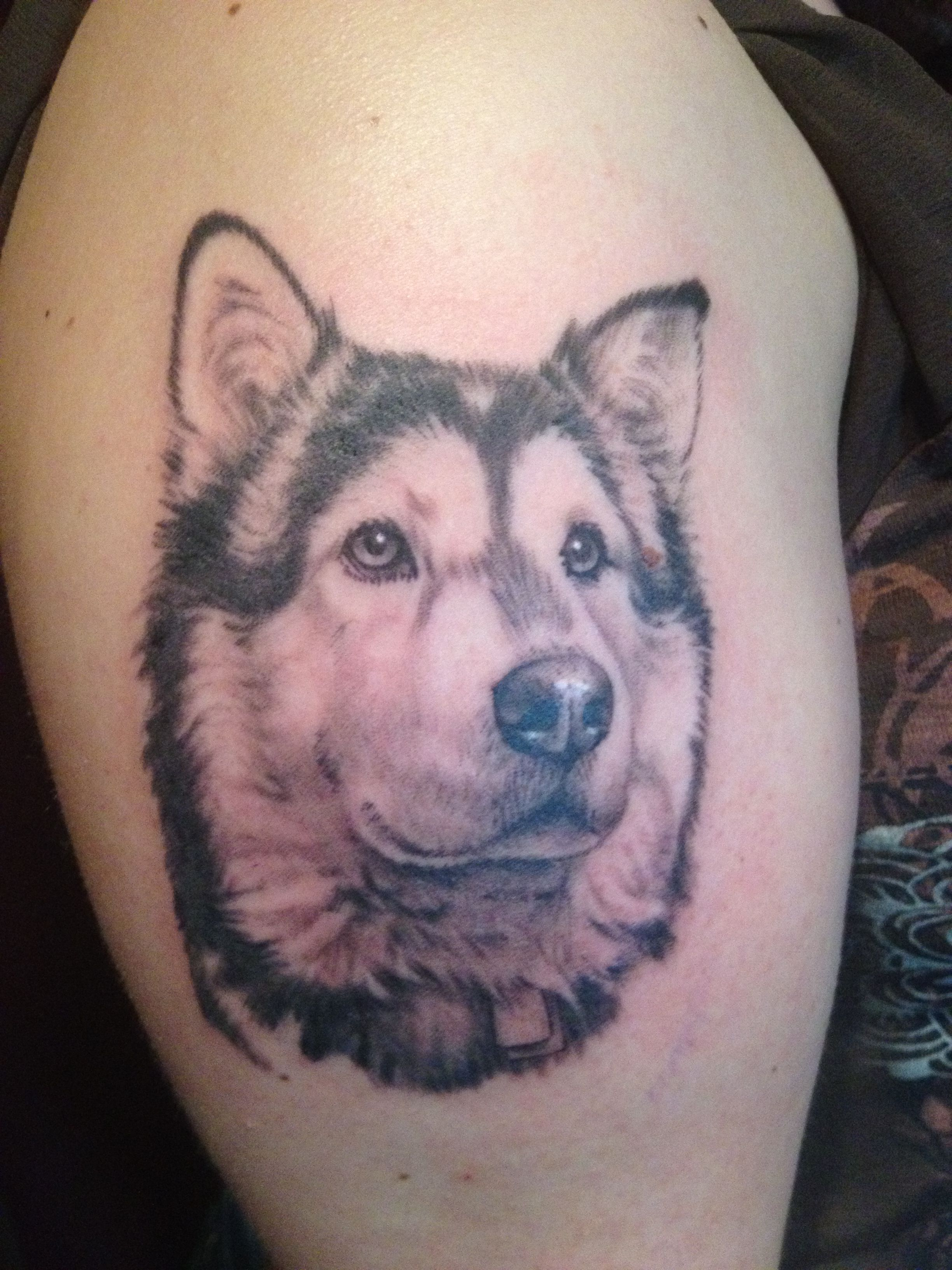 Husky Tattoo Image By Matthew Mattison On Tattoos Bookish