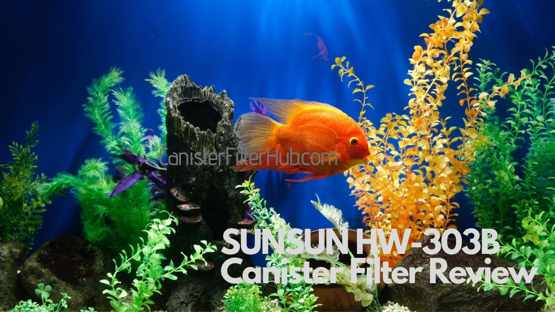 Are You Looking For The Sunsun 303b Canister Filter Review Well Read Our Blog We Are Not Trying To Sale J 40 Gallon Turtle Tank Turtle Tank Flexible Tubing