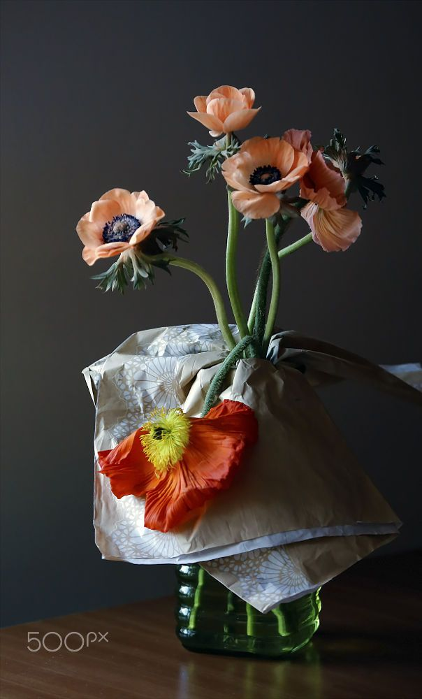 Anemone Anemone Flowers Foto Still Life