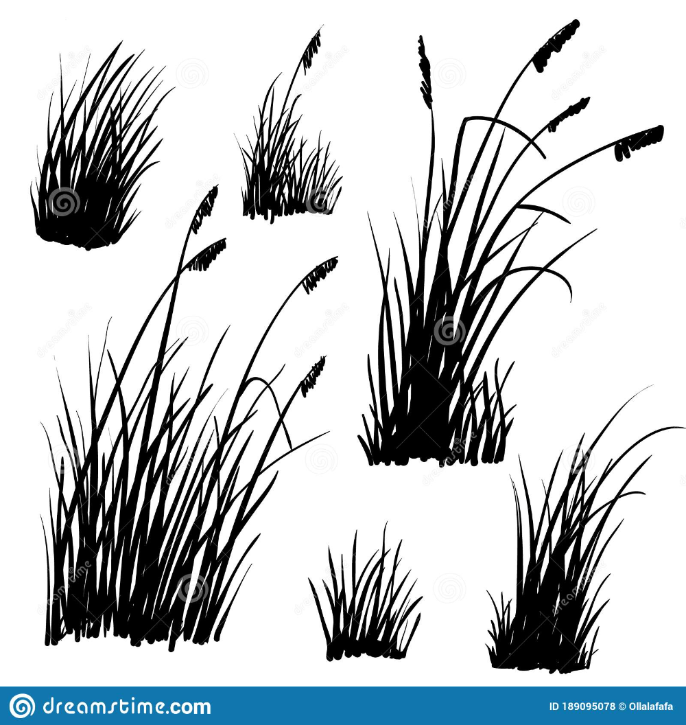 Beach Grass Silhouettes On White Stock Vector Illustration Of Drawn Herb 189095078 Grass Silhouette Grass Drawing How To Draw Hands