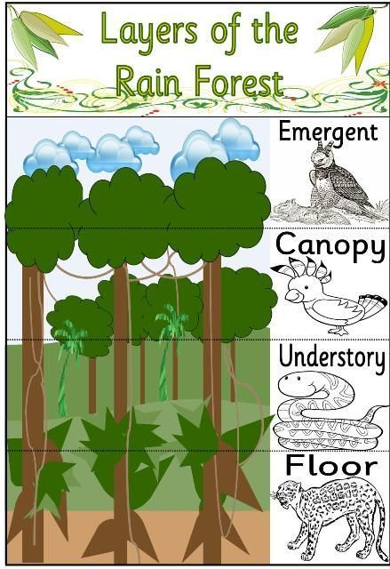 Rain Forest Amazon Rainforest Classroom Rainforest Activities