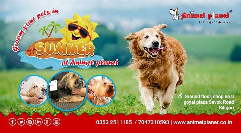 Animel Planet The Nearest Pet Store In Siliguri Haldia Kolkata Pet Store Pets Online Pet Store