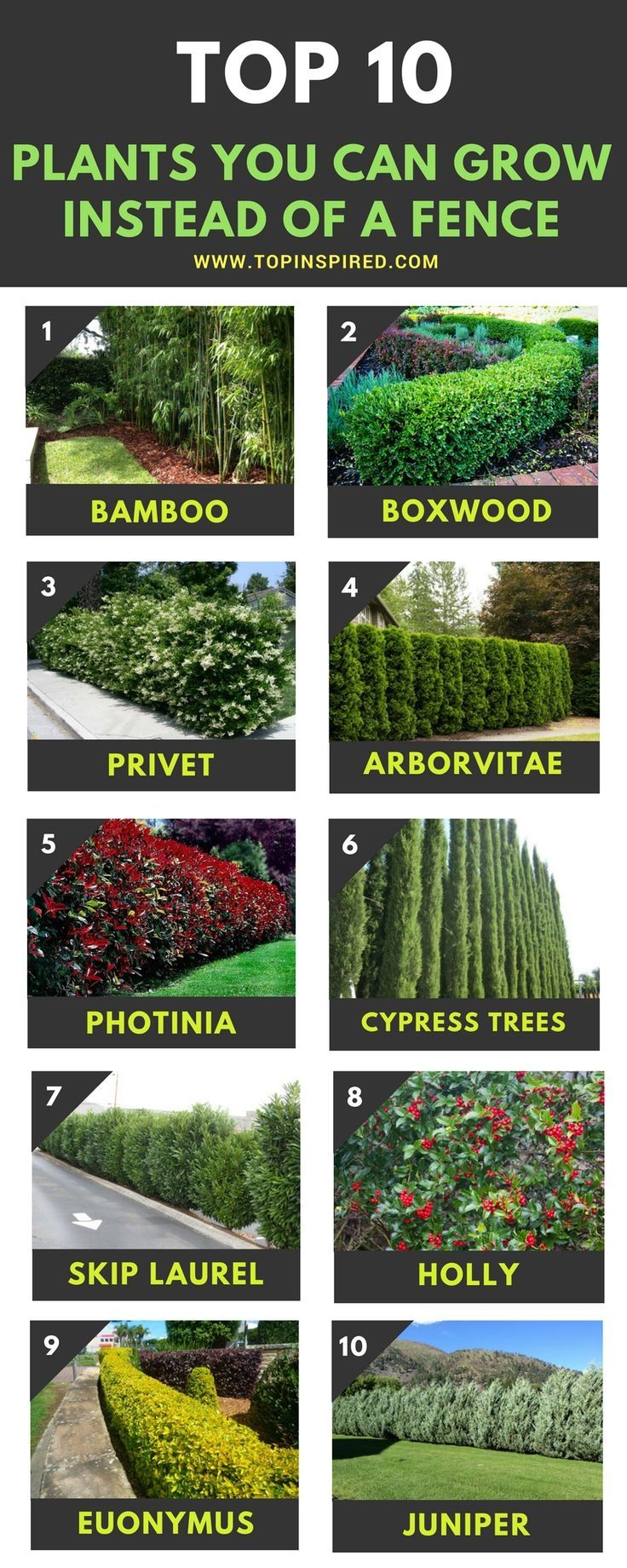 Top 10 Beautiful Plants You Can Grow Instead Of A Fence Backyard
