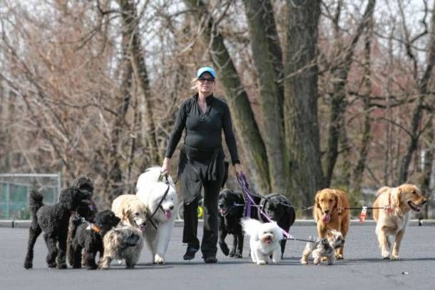 Pin By Bergencounty Com On Bergen County Pets Dog Friends Dog