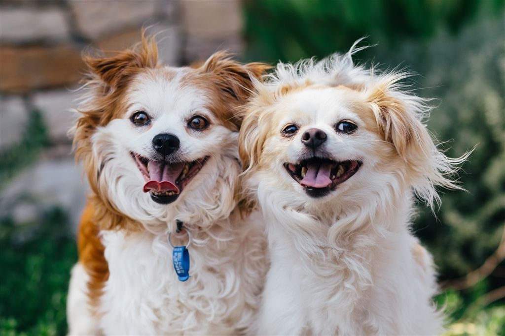 Hi There I M Georgia And This Is Lenny We Are Besties And Hope To Be The Perfect Pair You Ve Been Waiting For We Animals Care Animal Stories Service Animal