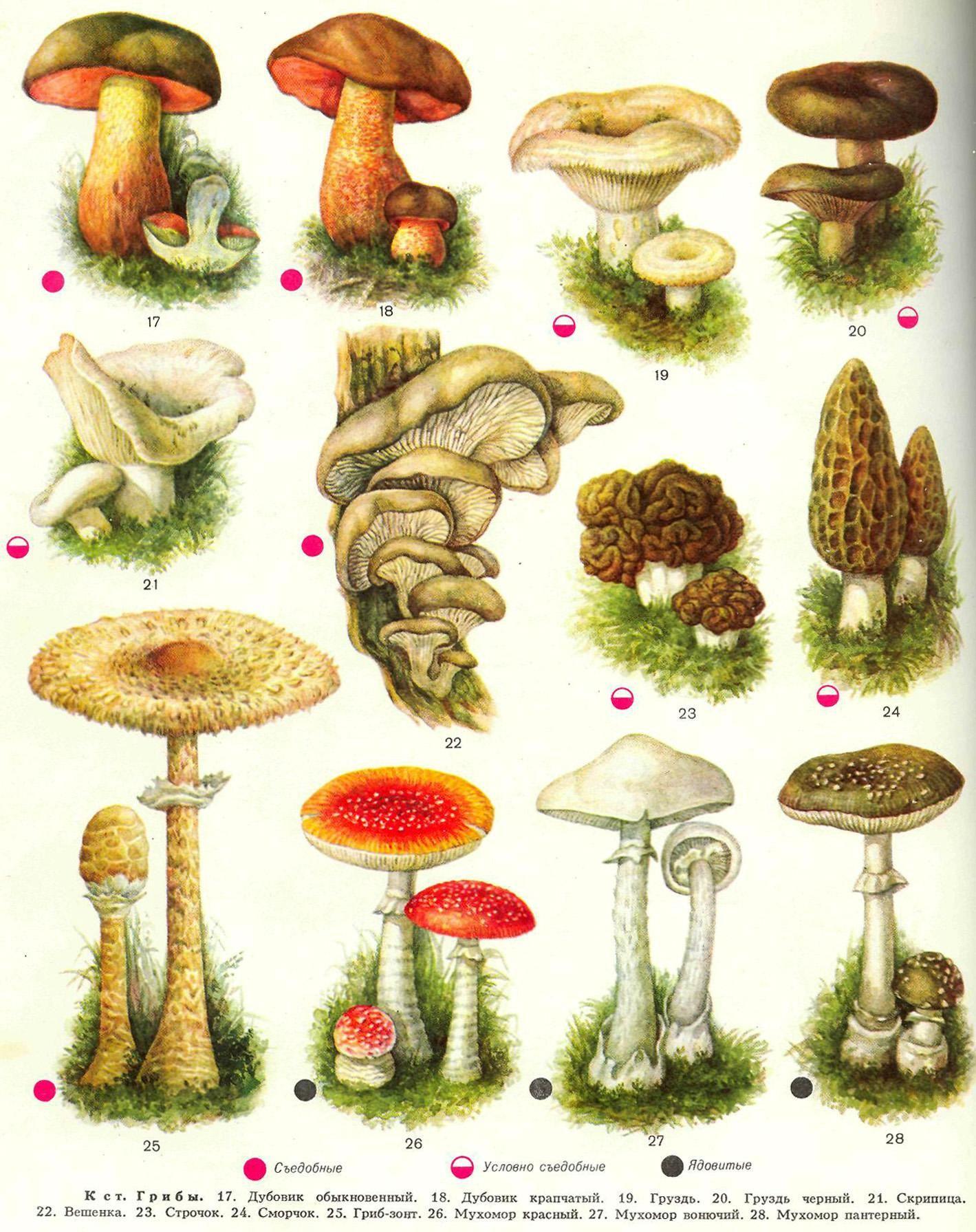 очередное задание, все грибы картинки фартуки, достаньте продукты