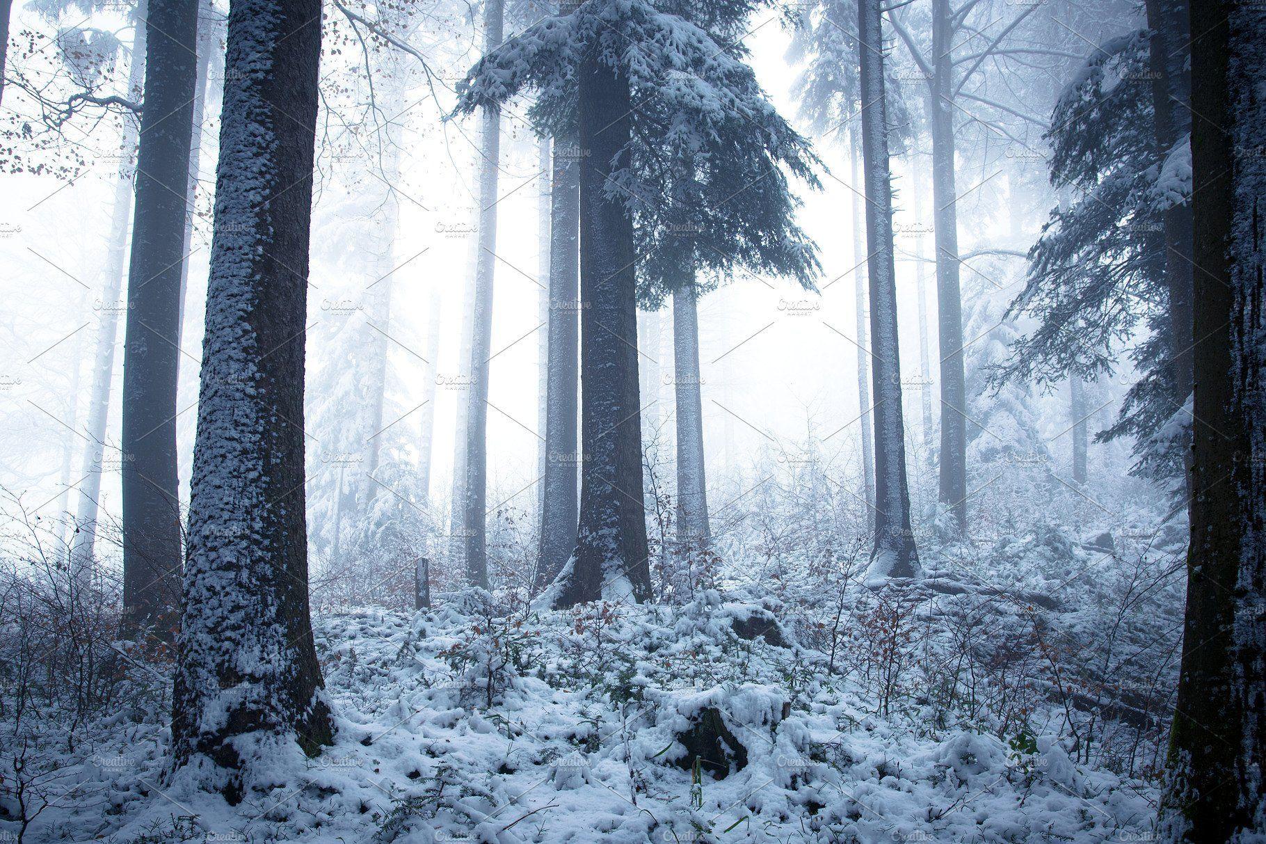 Winter Forest Winter Forest Forest Art Forest