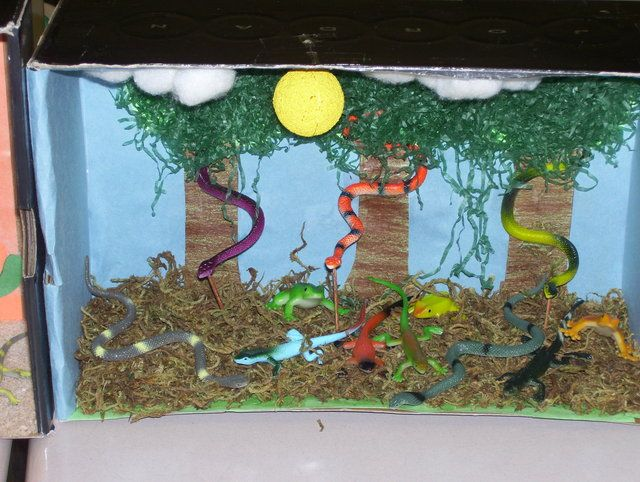 animal habitat projects Animal habitats diorama, poster, brochure or speech  research the animal, its habitat and what that animal needs to do  project dealing with the .