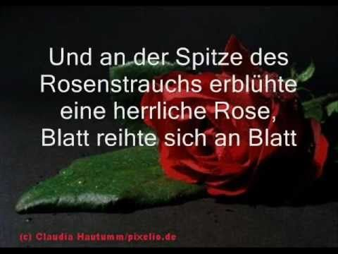 The black rose/ A Celtic Sanctuary