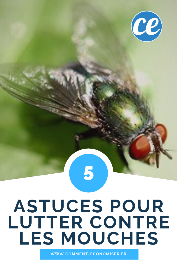 Remede De Grand Mere Contre Les Moucherons Dans La Maison 5 astuces efficaces pour lutter contre les mouches. | lutter