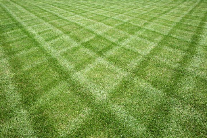 Pro Cut Lawn Care & Landscape