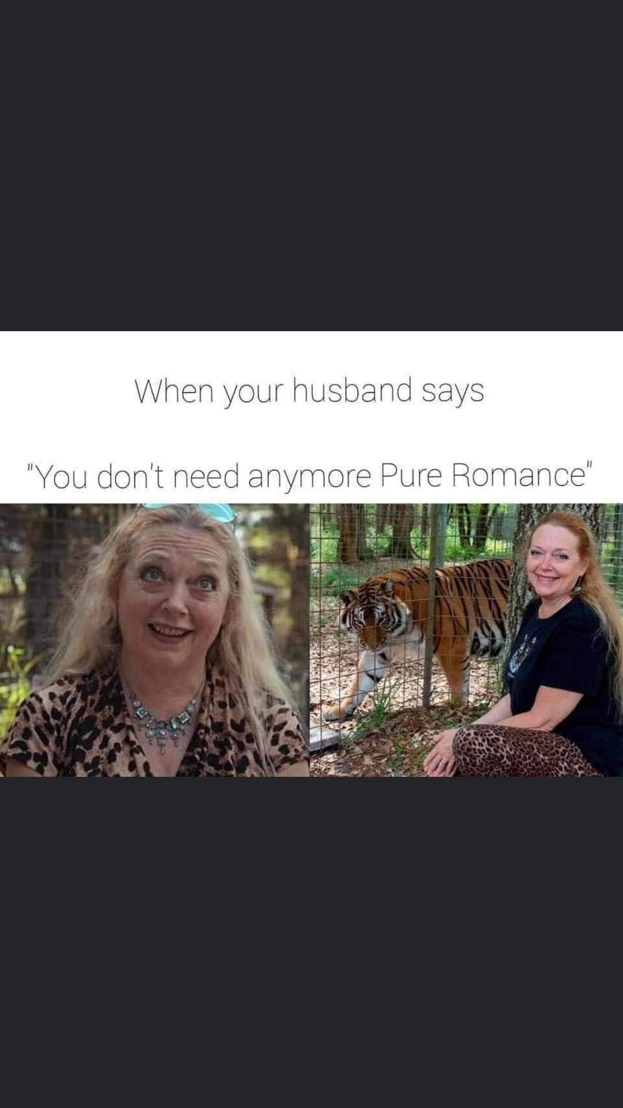 Hey All You Cool Cats Kittens In 2020 Pure Romance Pure Products Romance